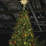 Rotfichte, Blaufichte, das ist die Weihnachtsbaumgeschichte